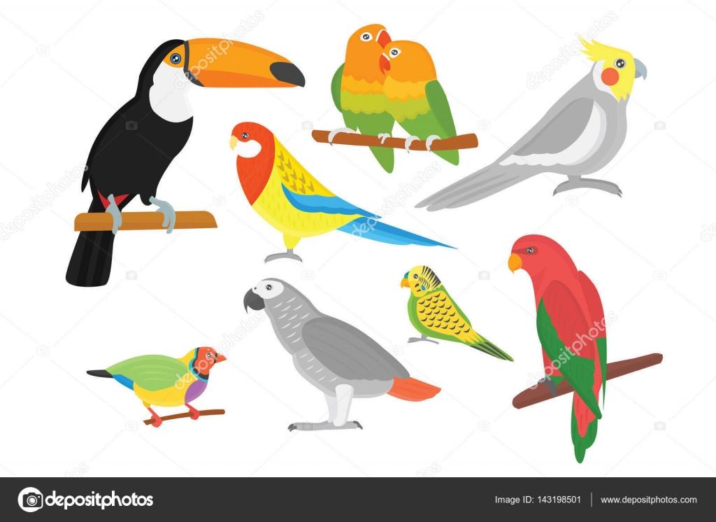 Dibujos animados de ilustración de vector de aves silvestres ...