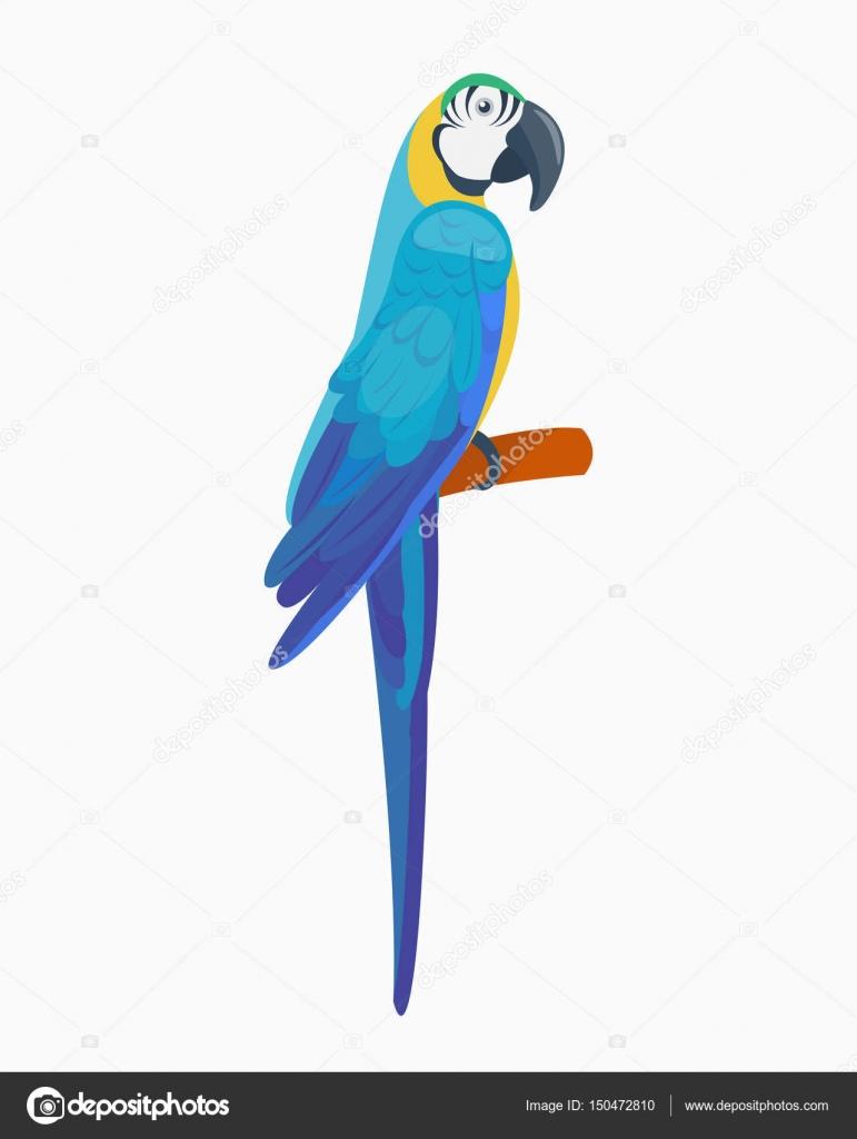 Dessin anim tropical perroquet oiseaux animaux sauvages vector illustration la faune plumes zoo - Perroquet en dessin ...