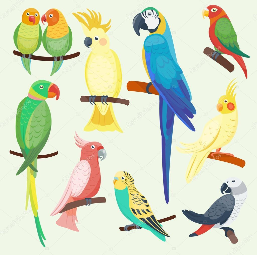 Insieme di pappagalli esotici del fumetto vettoriale