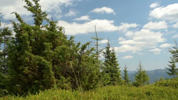 Jalovce v horách