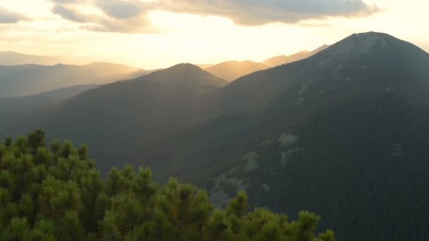 Sunset, mountains, alpine pine, wind