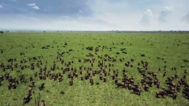 Letecké letu nad Buffalem odcválat Tanzanie Safari Mikumi