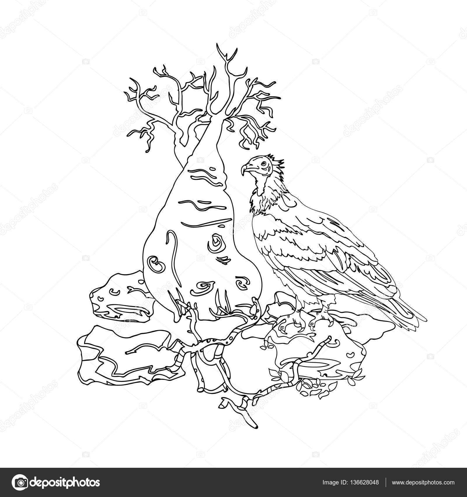 картинка раскраска дерево остров сокотра грифа на камне