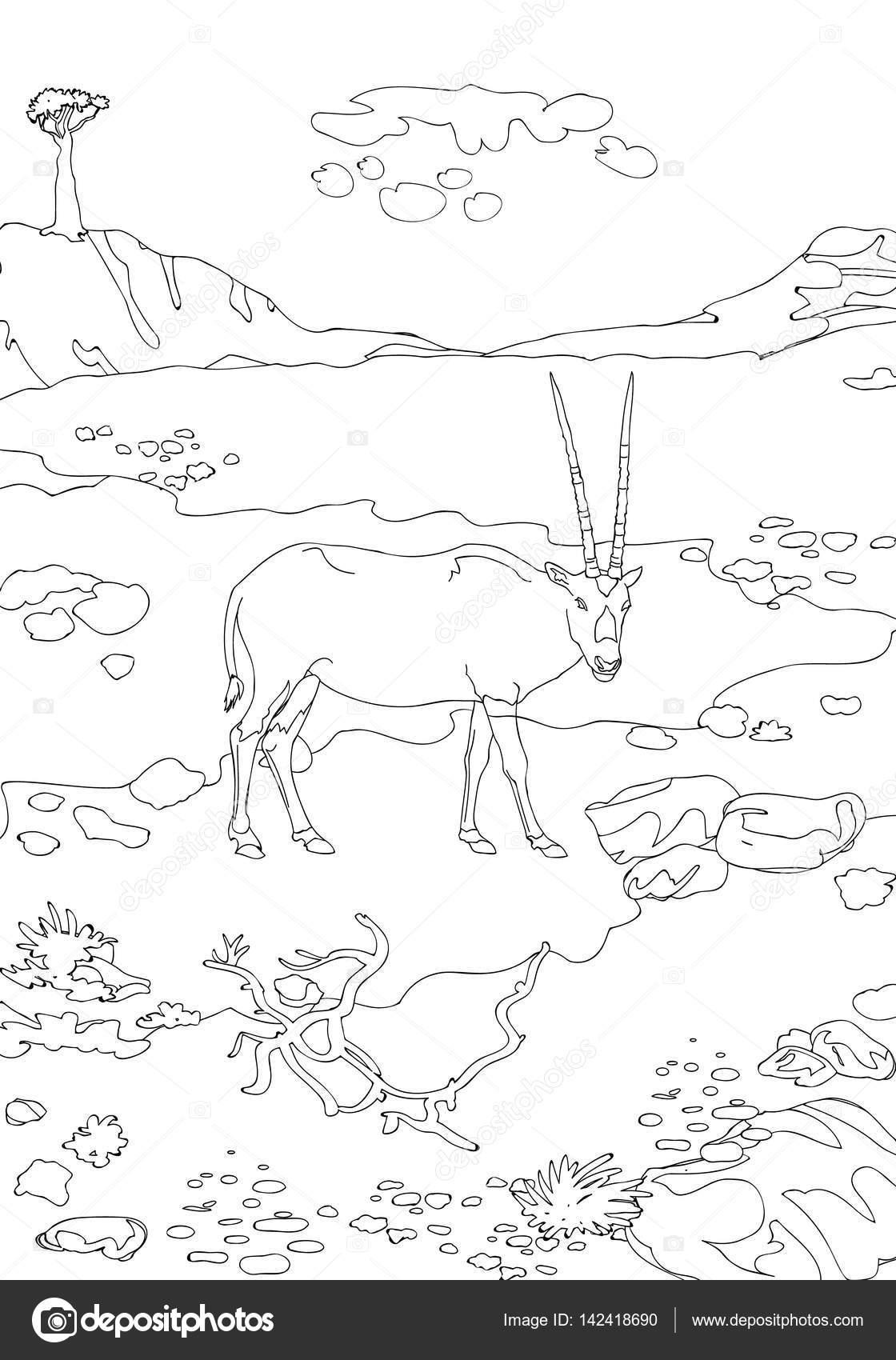 Hermosa Socorrista biungulados gacelas de Socotra, plantas y ...