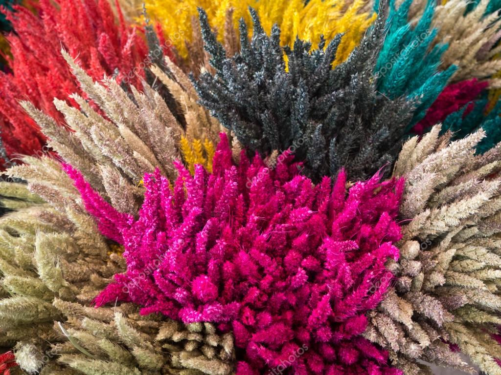 Close Up Of Dry Grass In Different Colors Stock Photo