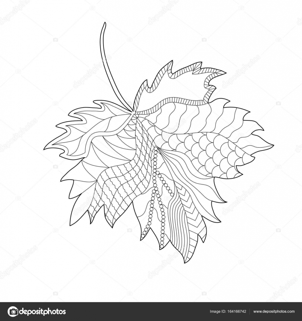 Maple Leaf. Contour hand drawing with pattern. Black and white ...