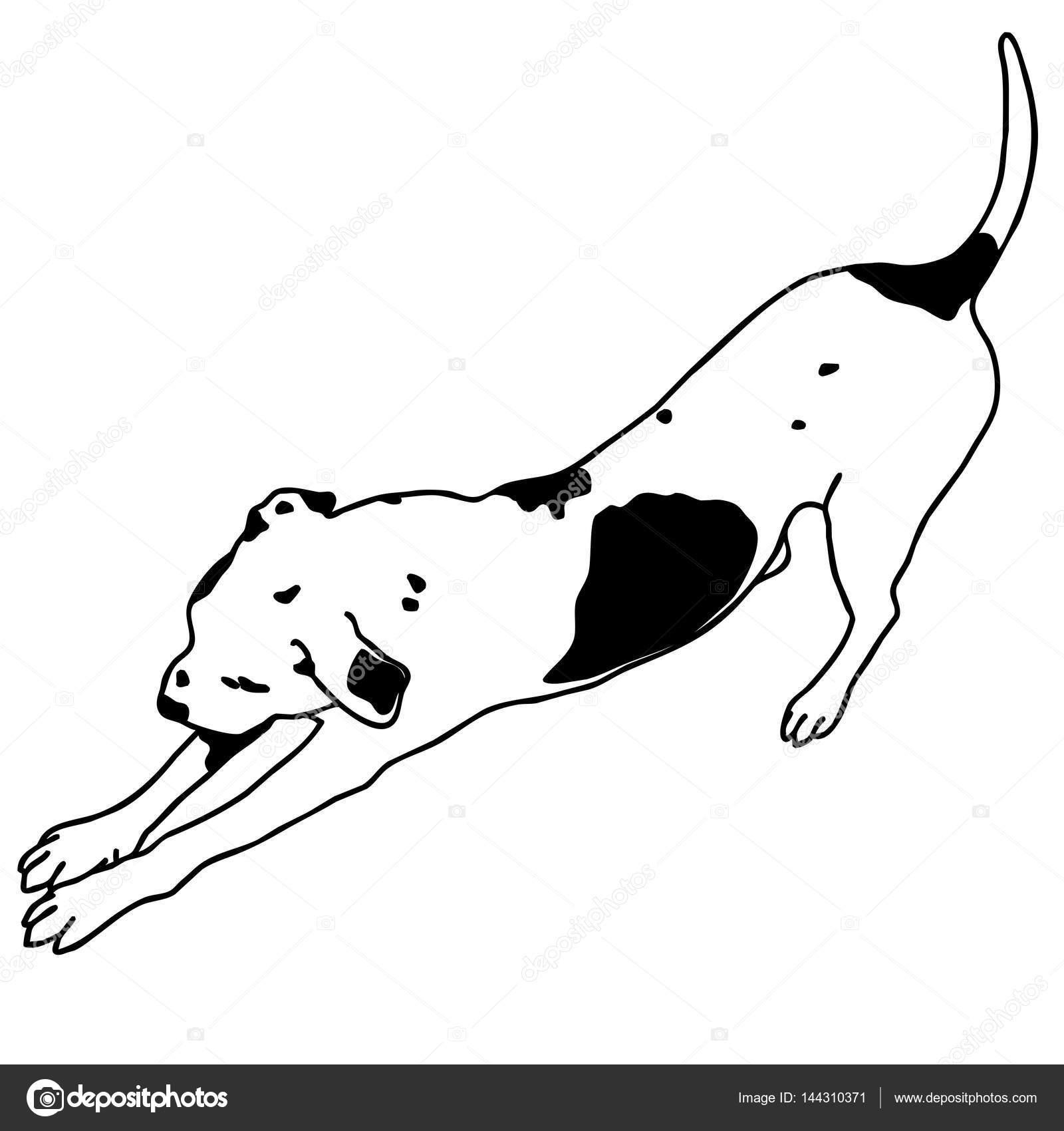 Cão de vetor preto e branco sentado. Inteligente e querido ...
