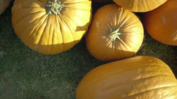Dýňová sklizeň. Halloween dýně. Podzimní venkovských rustikální pozadí s rajcata.