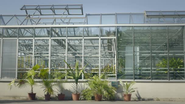Big greenhouse with glass walls, foundations, gable roof, garden bed.