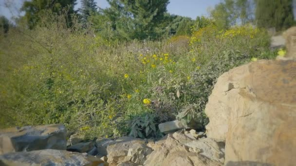 Botanická horská zahrada na slunečný den. Ve tvaru květu záhon s květinami prérii nebo poušť