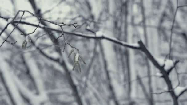 Winterlandschaft mit fallendem Schnee. Detail eines Baumzweiges. Alles ist mit frischem Pulver bedeckt. intensive Atmosphäre wie nordische Detektive. Winter Hintergrund für Weihnachten Thema. statischer Tagesschuss.