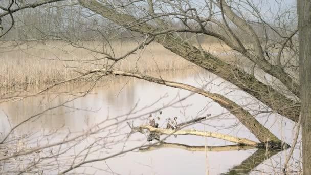 Jezero a volně žijících ptáků. Reed kolem jezera, slunečný jarní atmosféru. Trávy v popředí. Tiché idylickou atmosféru na jaře. Jemné vlnky na jezeře v pozadí. Stabilizované den zastřelil
