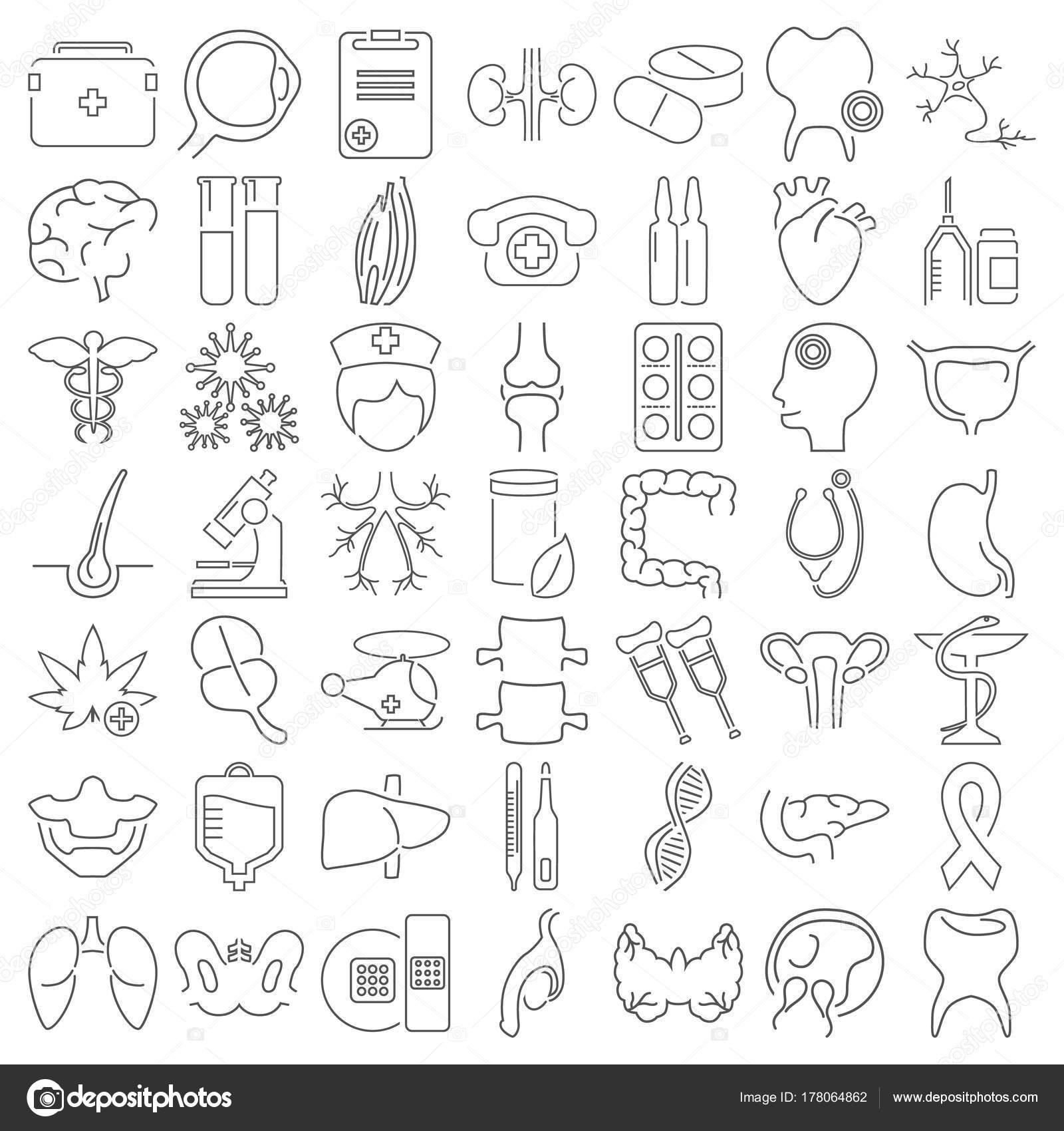 Grandes iconos de línea de medicina y anatomía sistema para diseño ...