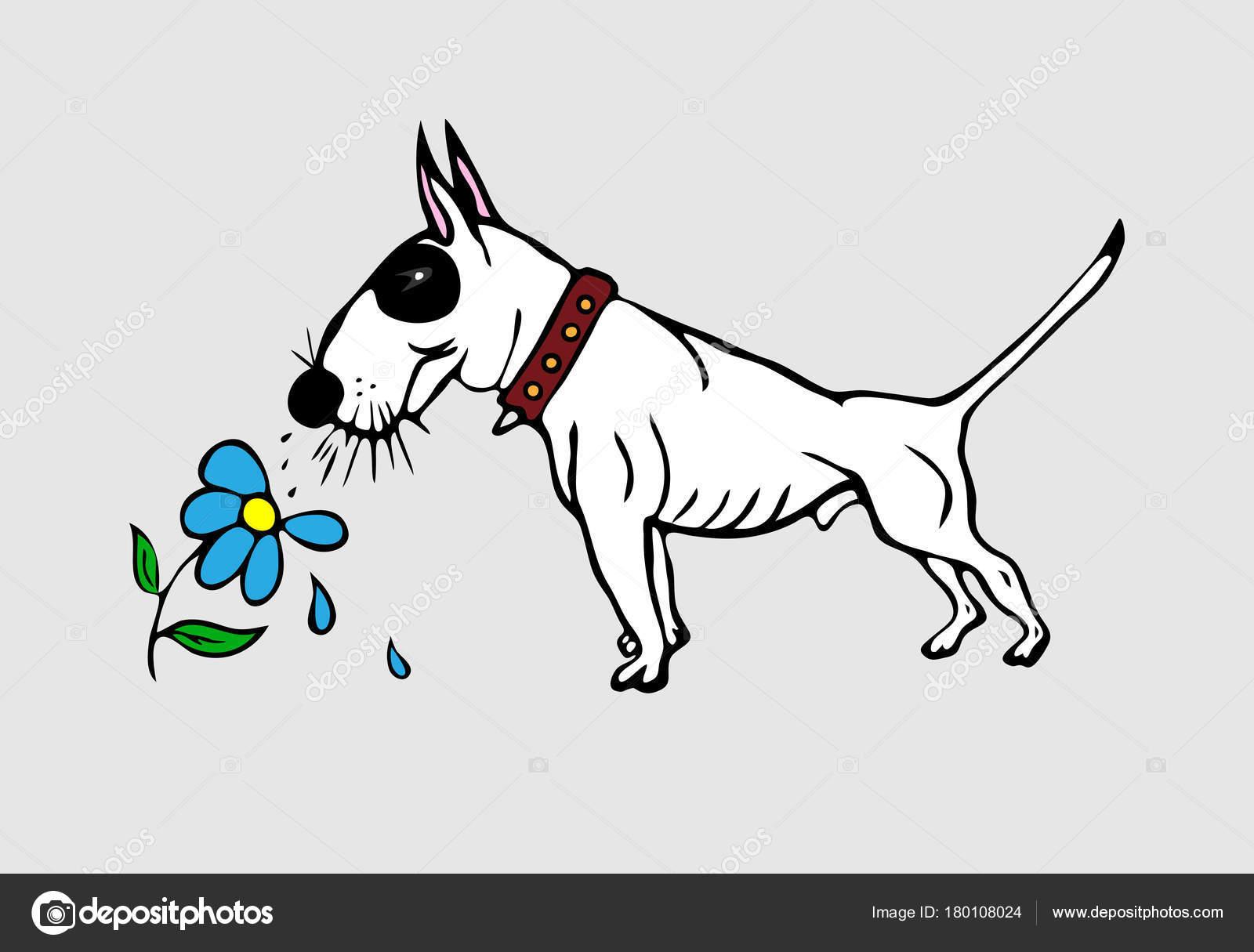 Süße weiße englische Bullterrier mit einem blauen Auge gemalt ...