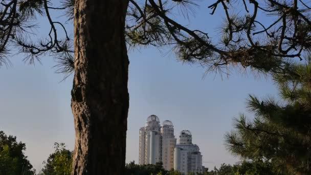 uUban park trees. city skyline skyscrapers. modern buildings landmark