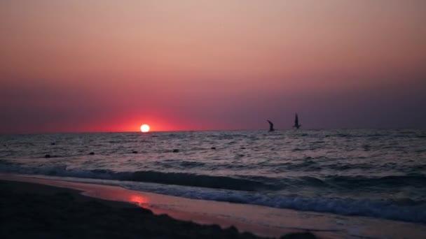 Východ slunce na pláži s létáním racky