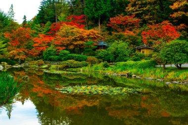 Japanese Garden in Seattle's Washington Park Arboretum
