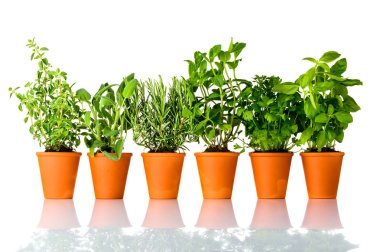 Different Culinary Herbs Growing in Pottery Pots on White Background. Oregano, Sage, Rosemary, mint, Parsley and Basil, each in separate Pot stock vector