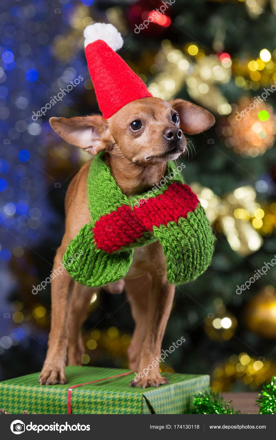 Gelber Hund auf Holztafeln mit Schal und Mütze Weihnachtsmann unter ...