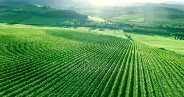 Ohromující zániku panorama Toscana vinice řádků. Letecký snímek.
