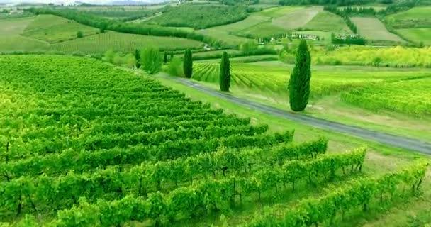 Felé repülő tájat Tuscany vew sorok felett. Légi felvétel.