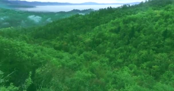 Aerial shot. Flying over a beautiful Forest in the Fog. Mountain