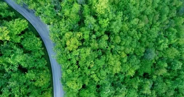 Cesta hustým zeleným lesem. Auto se pohybuje podél r