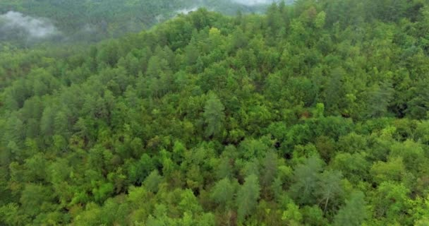 Aerial shot over a beautiful thick forest. Fog over the rainforest. Landscape panorama. Fog over the green forest.