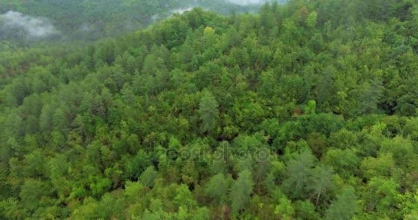 Légi felvétel több mint egy szép sűrű erdő. Köd felett az esőerdők. Táj panoráma. Köd, mint a zöld erdő.