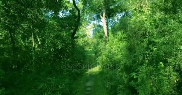 Letecký snímek úžasné země parku s hustými vzrostlými stromy a lesní cesty, v létě na slunci