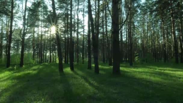 Posouvání zastřelil panoramatický výhled na zalesněné krajiny v dokonalé letní den ráno