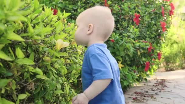 Curious cute boy is sniffing a beautiful flower on a green bush in the park while walking, slow mo