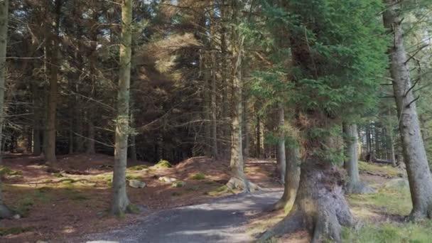 Někdo, něco projít lesoparkem oblast v teplé podzimní počasí dobré. Akční snímek.