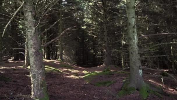 Akční snímek. Pomalu hnutí v lese podzim nebo jaro s holé kmeny. Norská lesní