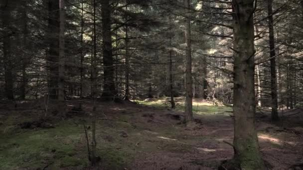 POV shot. Someone, something slowly moves through a thicket of gloomy forest with bare tree trunks.