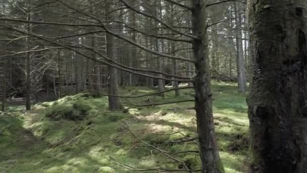 Někdo se pomalu pohybuje po lese mezi holé kmeny, na podzim nebo na jaře za dobrého počasí