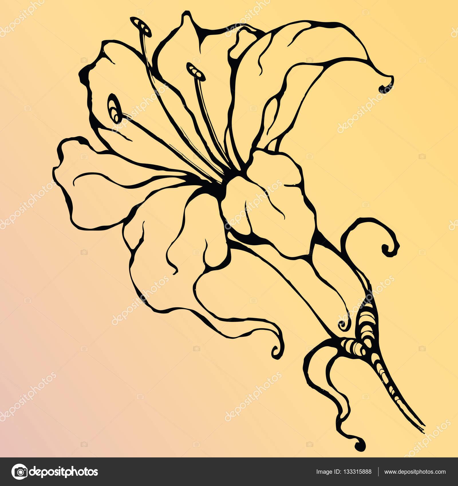 Elegant Lily Flower Stock Vector Aimimarin 133315888