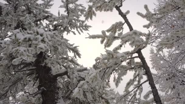 Weihnachten Schnee schön verschneiten Wald