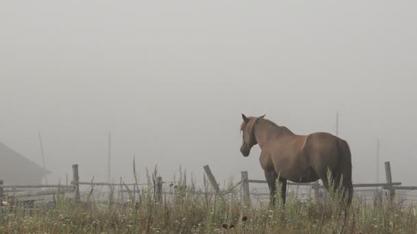 Pferde mit Fohlen ruhen auf Weiden an einem Sommermorgen Misty