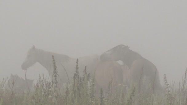 Koně s hříbata klidu na pastvu Misty