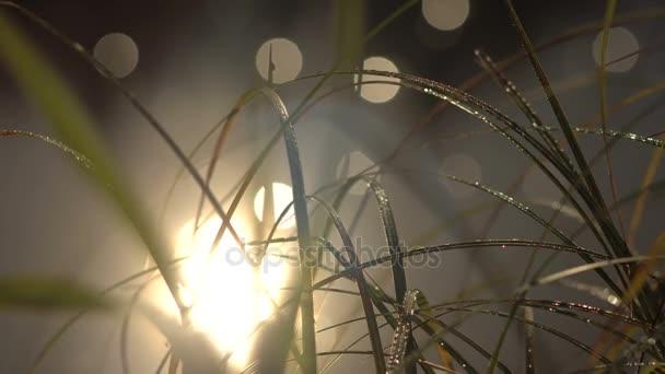 Pobřežní trávy v kapky rosy, odraz slunce v řece s skvrny Bokeh pohybu na vodě
