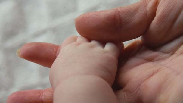 Babys hand in the hand of an adult