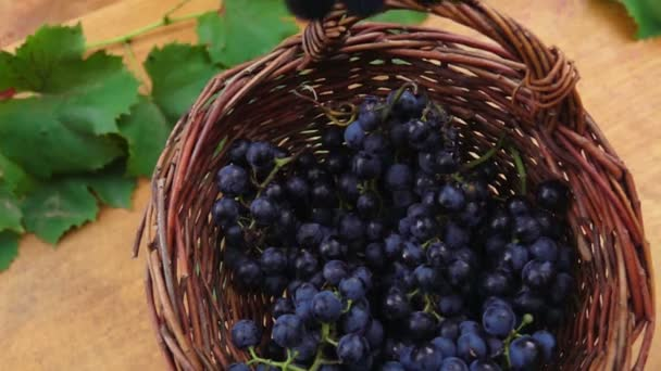 Bunch of grapes falling in the basket