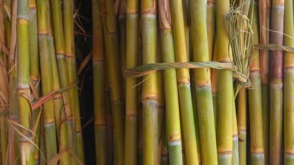 Cukornád-lé. Csomó-ból cukornád szárak