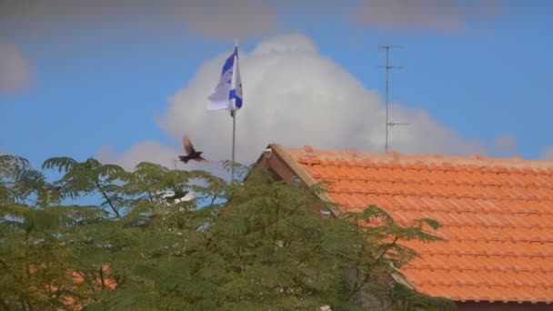 Birds fly against the flag of Israel