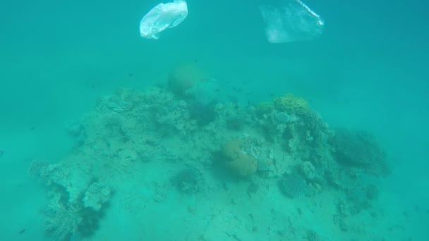 Koš se vznáší nad korálové útesy v Rudém moři