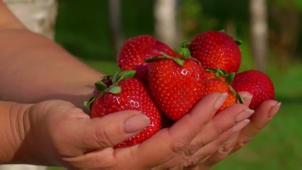 Ízletes nagy friss piros eper a kezében