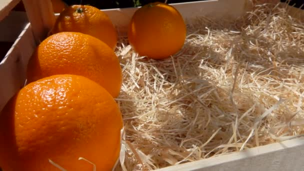 Juicy oranges are placed in a wooden box in a sunny day