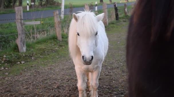 Krásný mladý kůň