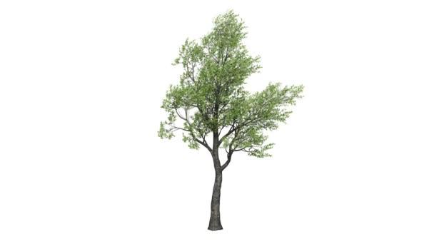 Opakování 3d realistické stromová izolované na bílém